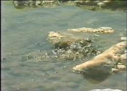 Bubling Springs in the Dead Sea
