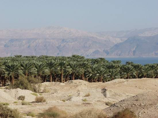 Date Groves by the Shore of the Dead Sea