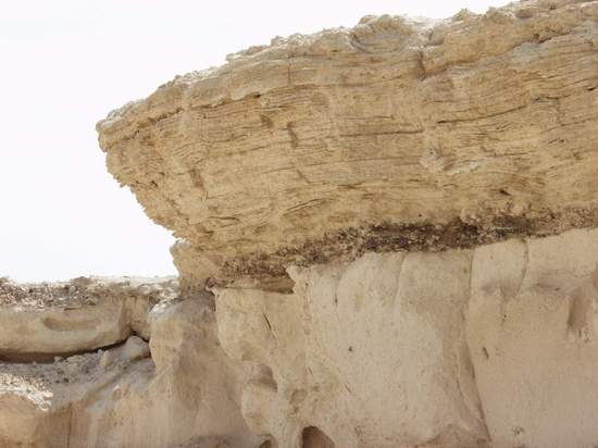 Organic Remains Compressed Between Limestone Layers