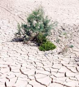 Plants on Dry Salty Soil by Shore of Dead Sea
