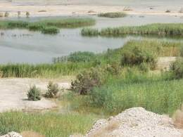 Ponds of Sweet Spring Water by the Dead Sea
